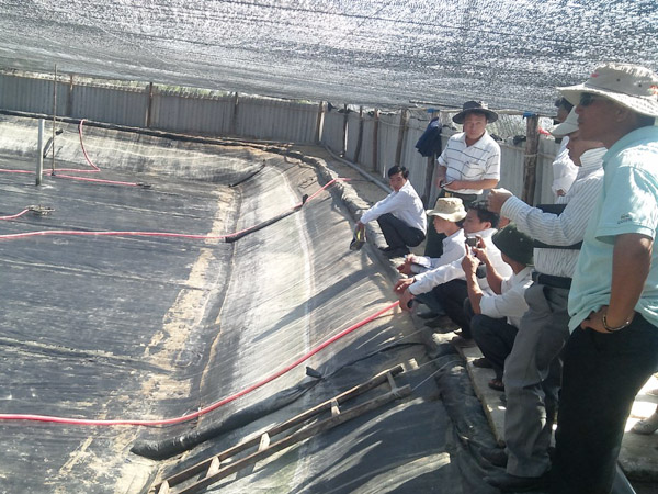 Ninh Thuận: Phòng bệnh EMS trên tôm nuôi