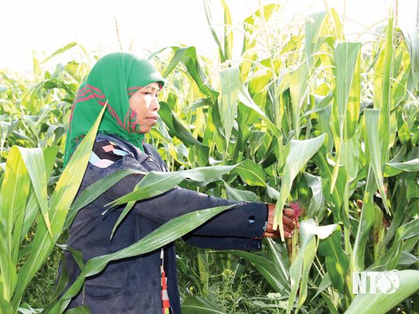 Phước Trung: Chuyển đổi cơ cấu cây trồng trong vụ đông - xuân 2020 - 2021