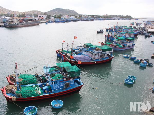 Nhiều tàu cá Khánh Hải ứng dụng thiết bị máy dò ngang trong khai thác hải sản mang lại hiệu quả kinh tế cao.