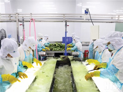 Công đoàn Ninh Thuận: Hành động vì lợi ích người lao động, sự nghiệp công nghiệp hóa, hiện đại hóa đất nước và phát triển của tỉnh nhà
